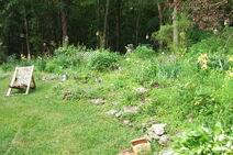 Garden 2010 b