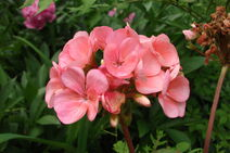 Garden 2010 ab