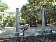 Sacremento emu
