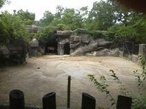 Prz horse cin zoo