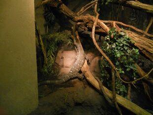 Croc monitor
