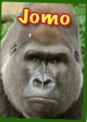 File:Jomo.png