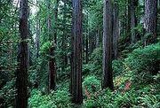 Redwood slope