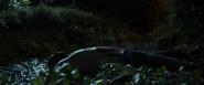 Colin's death