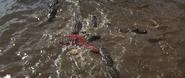 Mola Ram's death