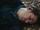 Adam Chanler-Berat