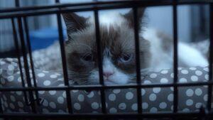 Grumpycat-worstchristmasever1