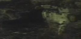 1971-GodzillavsHedorahavi10