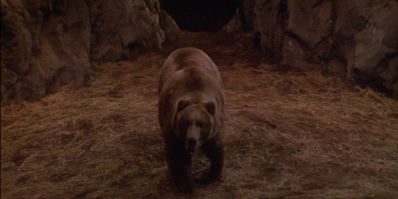 Bart the Bear in 'Clan of the Cave Bear'
