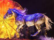 Horse LUZIA
