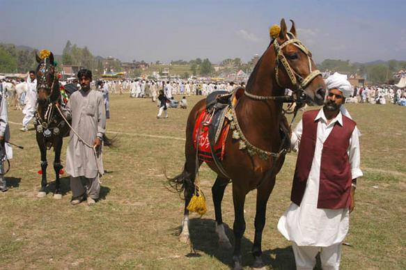 File:PakistanLahoreHorse&CattleShow.jpeg