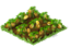 Starfruit Seedling