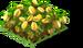 Starfruit Fruit