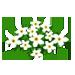 White Freedom Flowers-icon