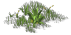 Low Grass01