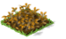 Starfruit Withered