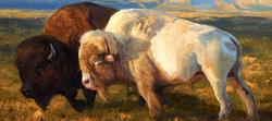 Event White Buffalo