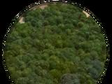Forest (Civ5)