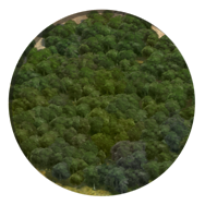 File:Forest (Civ5).png