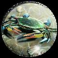 Crab (Civ5)