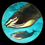 File:Whales (Civ5).png