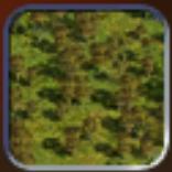 Light Forest (Civ4Col)