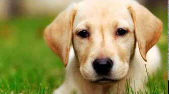 CREEPYPASTA Dogs Do's and Don'ts