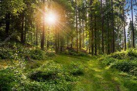 Camp Forêt