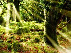 Territoire Forêt