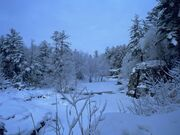 Winter-snowy-forest