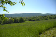 Grassy field BRCES1
