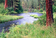 Metolius river pine lg