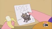 Cat Missing - 033