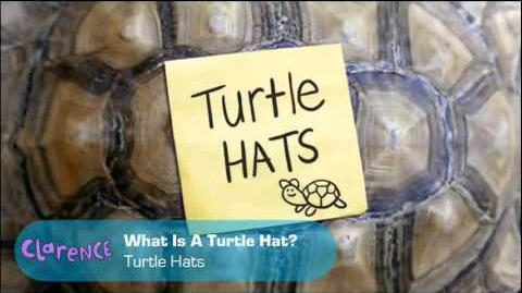 Clarence - What Is A Turtle Hat