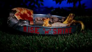 Rise and Shine - intro