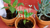 Clarence S02E26 Plant Daddies