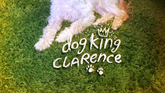 Carta - Dog King Clarence