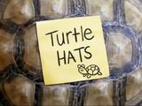 Sombrero de tortuga
