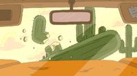 Joshua hitting cactus