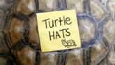 Carta - Turtle Hats