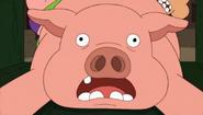 This little piggy needs help