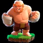 Boxer Giant info