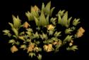 Npc-plant-2