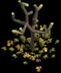 Npc-plant-1