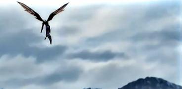 Kakuseisha Volando