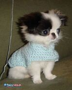 Cute dog sweater
