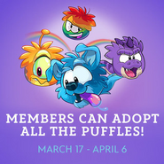 Puffles Party7