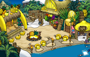 Festival of Fruit Cove