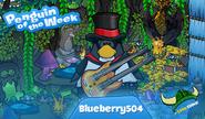 Blueberry504