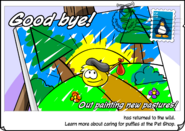 Yellow Ran Postcard